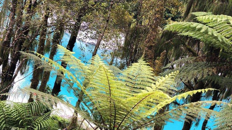Hokitika Gorge trees