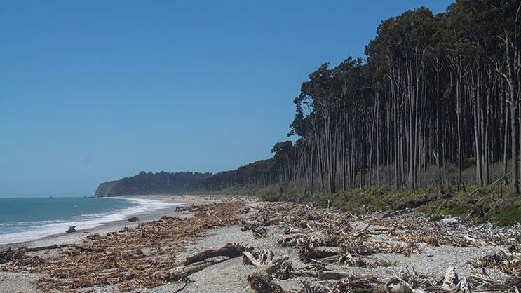 Bruce-Bay-New-Zealand.JPG