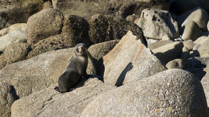 Cape Foulwind 3.jpg