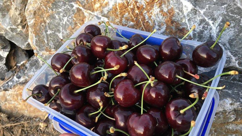 Cherry Box.jpg