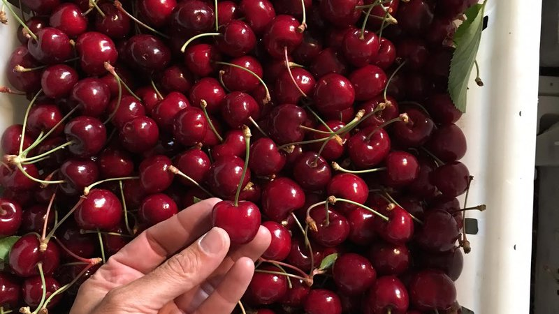 Cherry lots.jpg