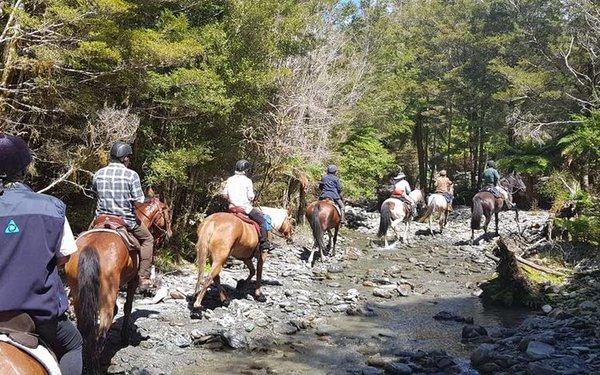 Haast Horse Trek.jpg