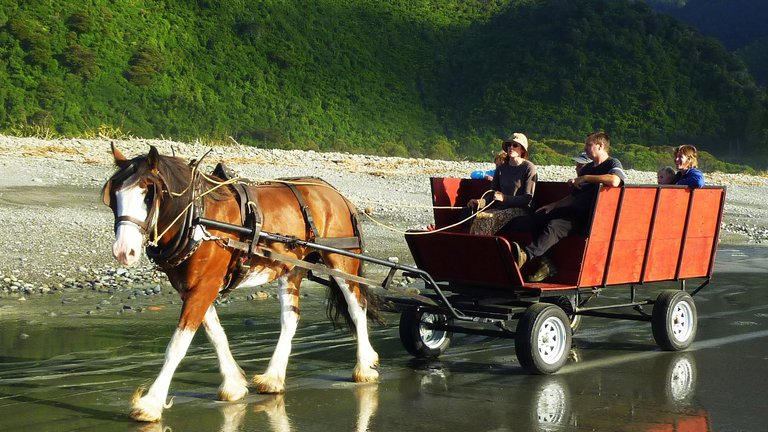 Horse wagon tours