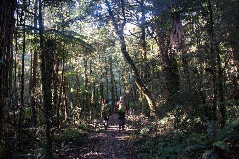 Indago - Forest.jpg