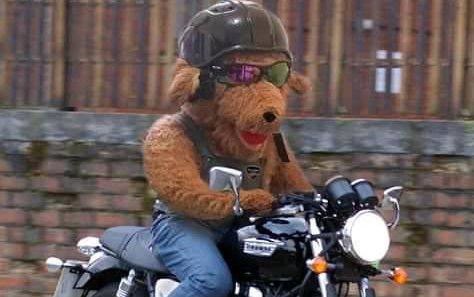 Teddy Bear Run.jpg