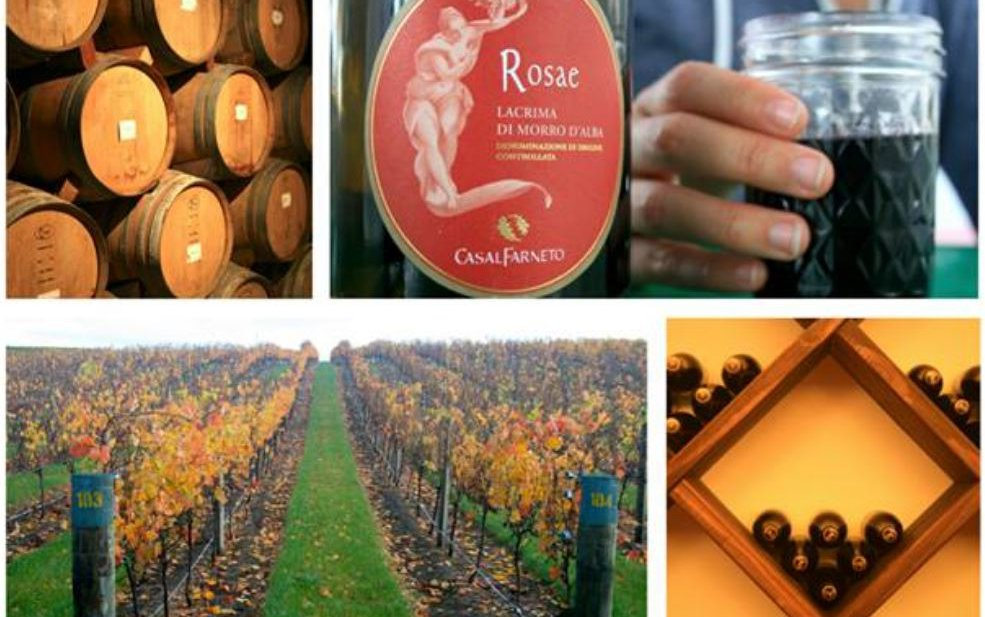 Wine Class 101 – Your guide to wine basics