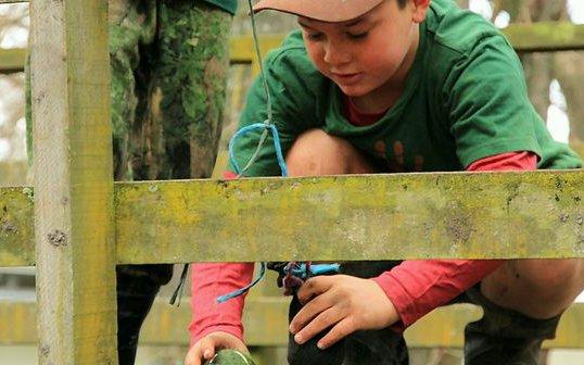 Woodland Tinkering.jpg