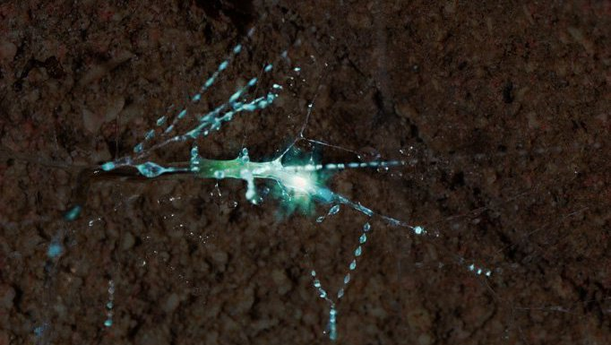 Gloworm cave tour