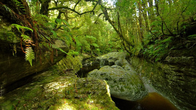 Oparara Wilderness