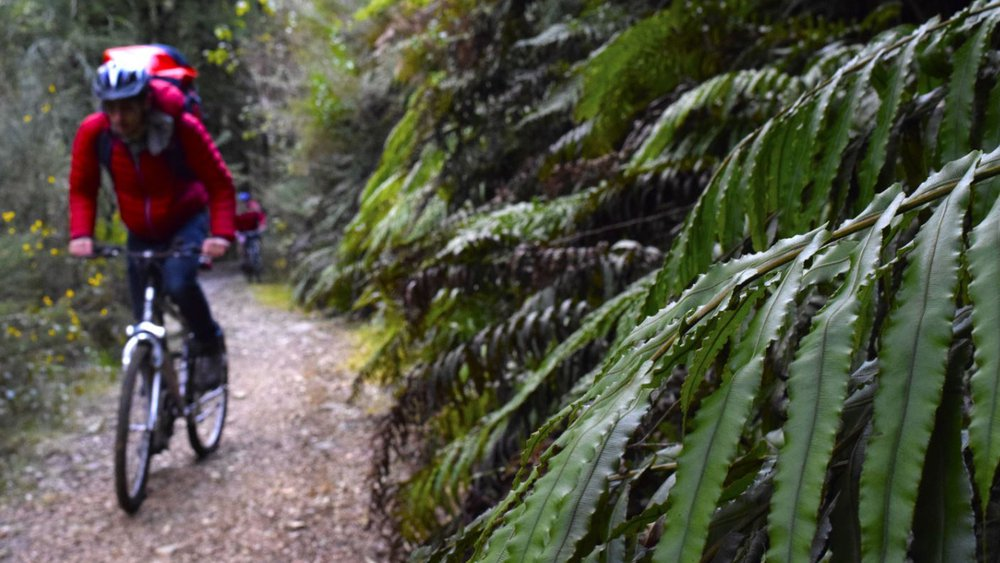 Biking the Zigzag Track in Reefton. Credit to BackpackerGuide.nz
